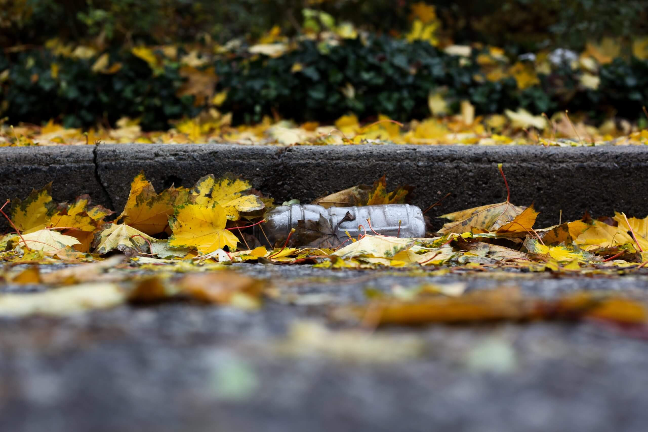 water bottle covered by leaves affecting the environment